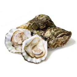 Molluschi di Mare