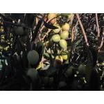 Bott. 1L Olio ExtraVergine d'Oliva Biologico