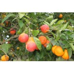 Succo Biologico Arancia Rossa 700ml